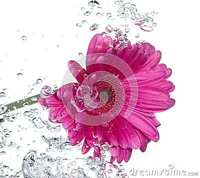 Free Flower Royalty Free Stock Photo - 9798505