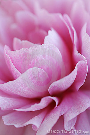 Free Flower Abstract Stock Photography - 6543052