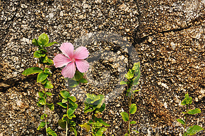 Flower against coarse rock background