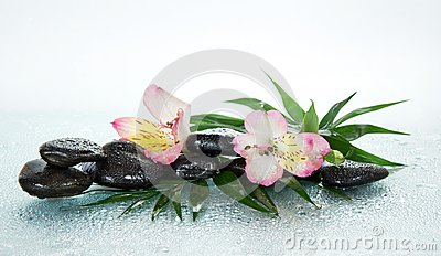 Flower of an alstroemeria and stones