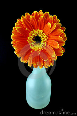 Free Flower And A Bottle Stock Image - 1813481