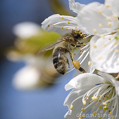 Free Flower And Bee Royalty Free Stock Photo - 9038915