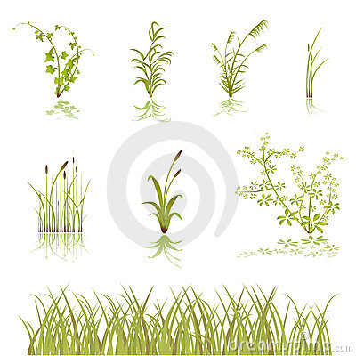 Free Flower And Bushes Vector Stock Photography - 9259812
