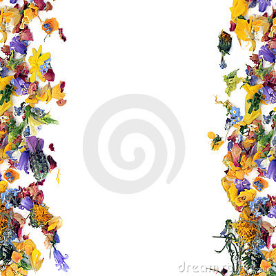 Free Flower And Herb Leaf Border Stock Photos - 12013433