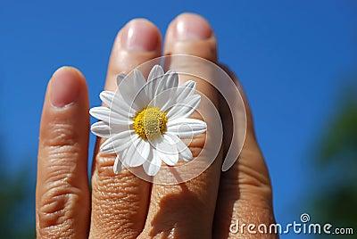 Flower annd hand