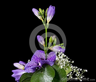 Flower arrangement of a blue vanda