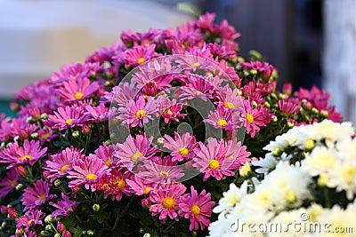 Flower Arrangement Of Mums