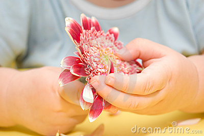 A flower in baby s hands