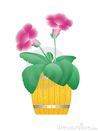 Flower in a barrel