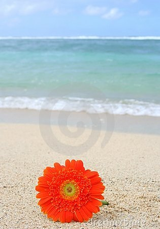 Flower on the beach