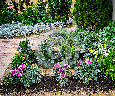 A flower bed in the garden stock photo image 69254682 for Ornamental trees for flower beds