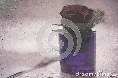 Flower blossom in vase