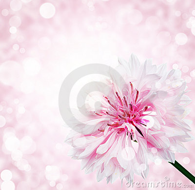 Flower with  bokeh