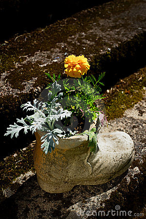 Flower in boot shaped pot