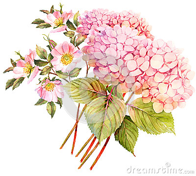Free FLower Bouquet. Hydrangea And Rose Bush In Blossom. Watercolor I Stock Photo - 80392960