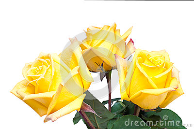 Flower bouquet from yellow roses isolated on white