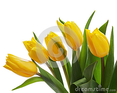 Flower bouquet from yellow tulips isolated on white background.