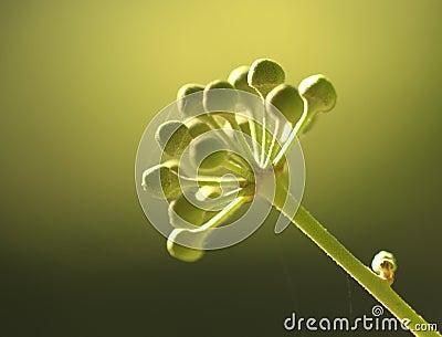 Flower bud close up