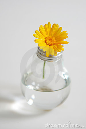 Flower in a bulb