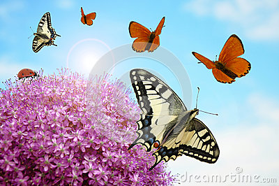 Flower with butterflies and ladybug