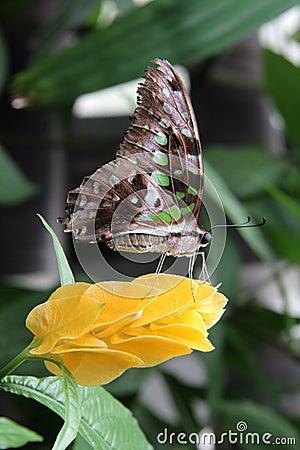 Flower Butterfly