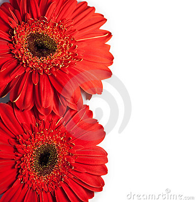 Flower Card With Space For Text Stock Images - Image: 18378394