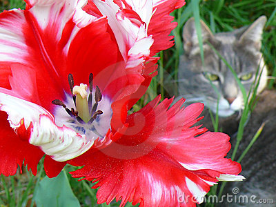 Flower And Cat Royalty Free Stock Photography - Image: 5334067