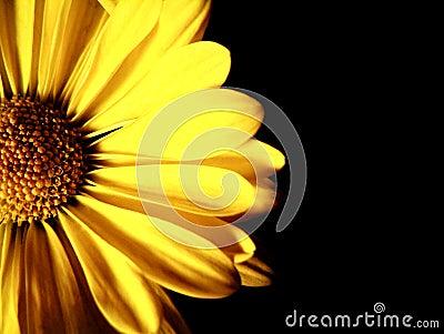 Flower Close-up