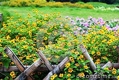 Flower in cluster