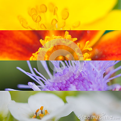 Free Flower Collage Of Summer Flowers Royalty Free Stock Photography - 26192517