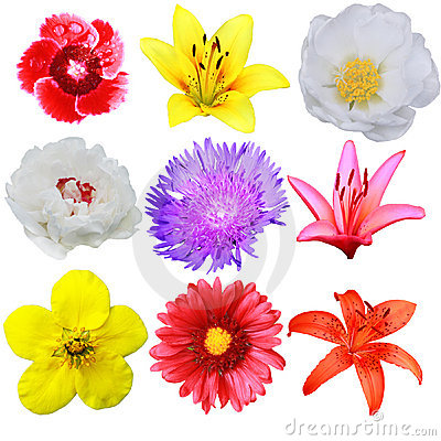 Free Flower Collection Royalty Free Stock Photography - 5536457
