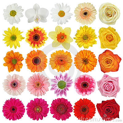 Free Flower Collection Stock Images - 9094284