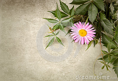 Flower Composition Royalty Free Stock Photos - Image: 26888068