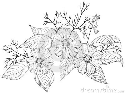 flower cosmos contours stock images image 19053394