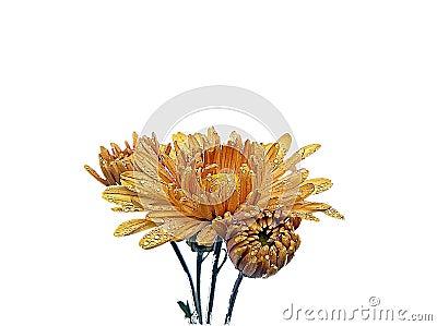 flower designe