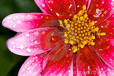flower with drop of water