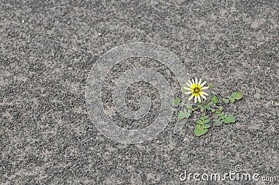Flower on dry soil