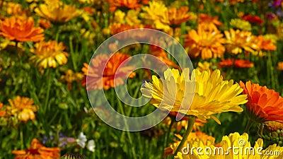 Flower Field Free Public Domain Cc0 Image