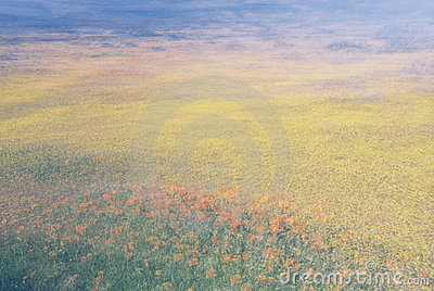 Flower Field Abstract