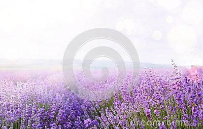 Flower field and sky.