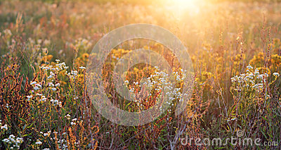 Flower field in the sunshine