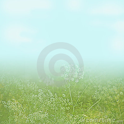 Flower field under a light blue sky background