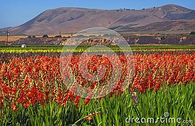 Flower Fields, Central California
