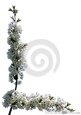 Flower frame #04 (isolated)