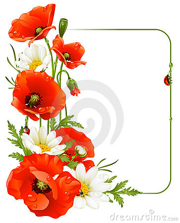Free Flower Frame 8. Poppy And Camomile Royalty Free Stock Photos - 18770708