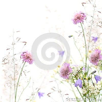 Free Flower Frame - Spring Or Summer Background Stock Images - 25716434