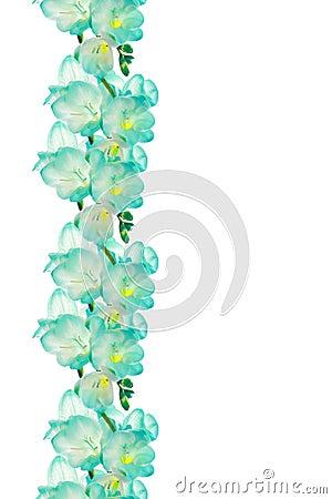 Flower (fresia) border design
