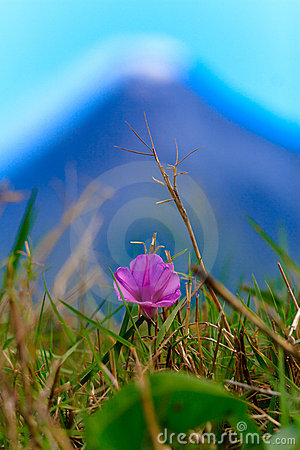 Flower in front of a Volcano Smoking