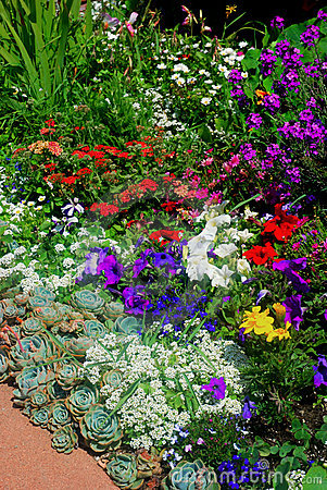 Free Flower Garden Royalty Free Stock Images - 5436779
