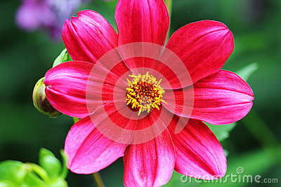 A flower garden beautiful red